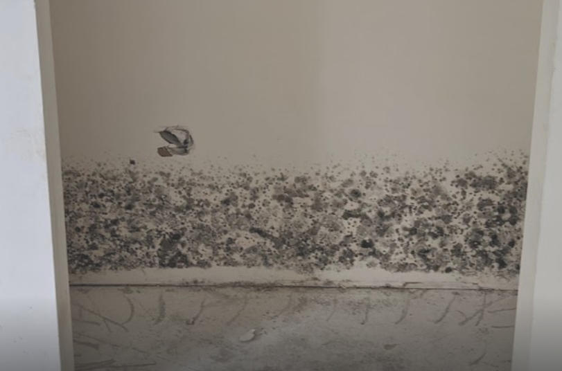 Black Mold on Wall